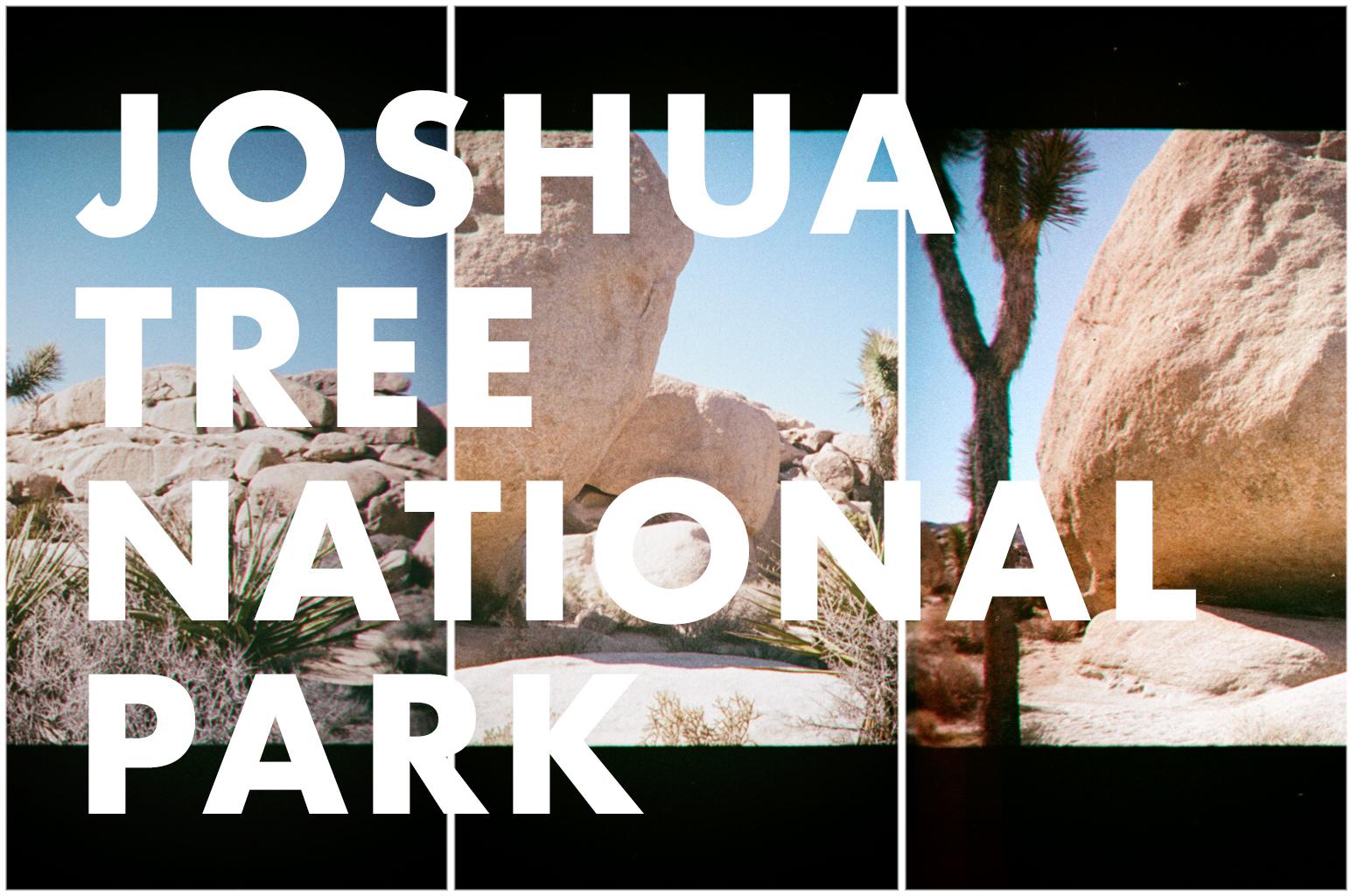 joshua tree_HeadderImage